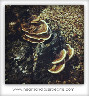 A cool fungus I found before cops called on our family | www.heartsandlaserbeams.com